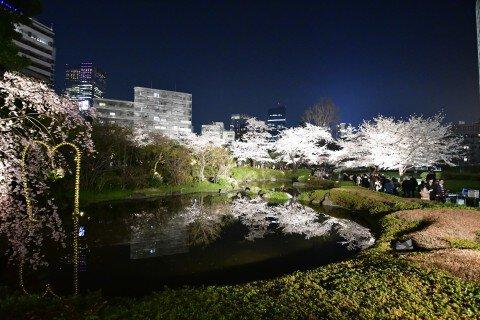 【桜・見頃】六本木ヒルズ 毛利庭園・六本木さくら坂