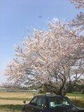 成田空港周辺
