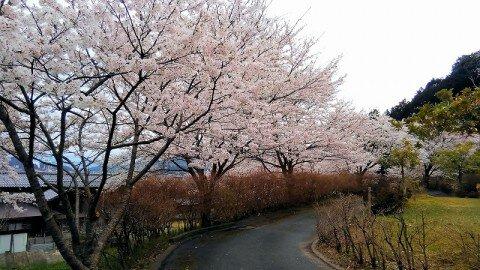 男山八幡公園