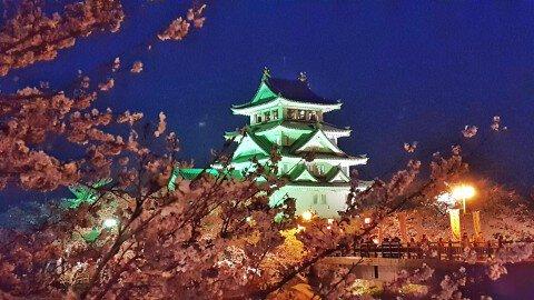 【桜・見頃】墨俣一夜城址公園・犀川堤の桜名所写真