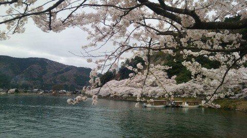 【桜・見頃】海津大崎の桜名所・お花見写真