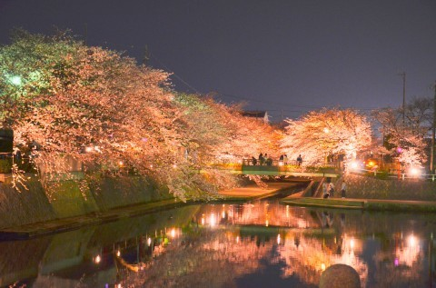 水門川周辺の桜名所・お花見写真