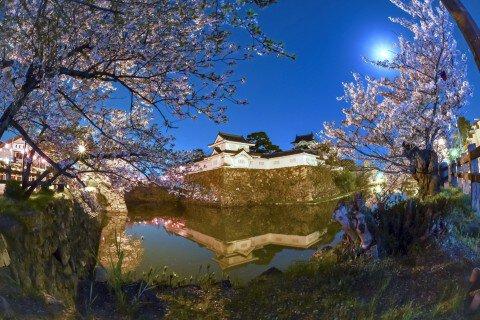 【桜・見頃】岸和田城周辺