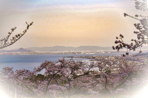 蓬莱山の桜名所・お花見写真
