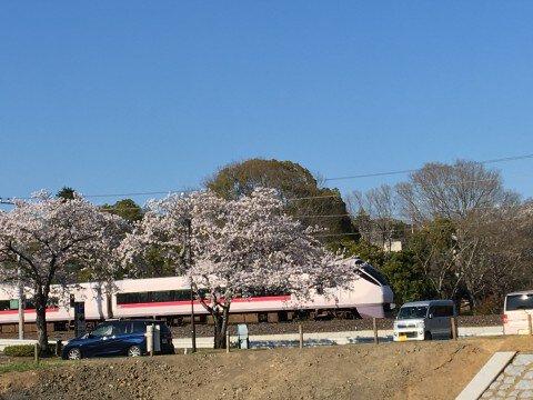 偕楽園の桜名所・お花見写真