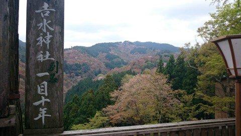 【桜・見頃】吉野山(上千本)の桜名所・お花見写真