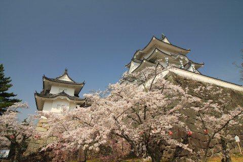伊賀上野城の桜名所・お花見写真