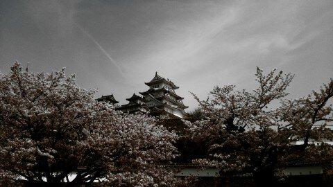 【桜・見頃】姫路城の桜名所・お花見写真