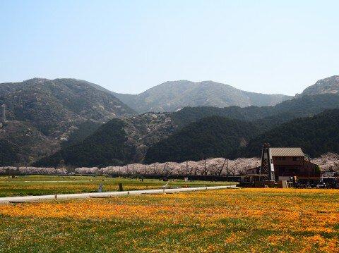 松崎町那賀川沿いの桜名所・お花見写真