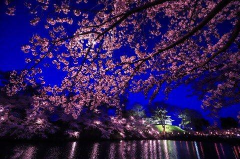 【桜・見頃】高田公園