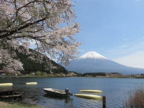 田貫湖の桜名所・お花見写真
