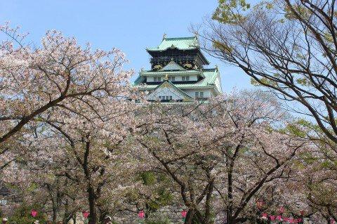 【桜・見頃】大阪城公園の桜名所・お花見写真