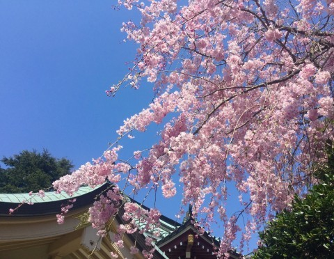 石神井公園 禅定院