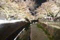 東宝スタジオ沿い 仙川遊歩道