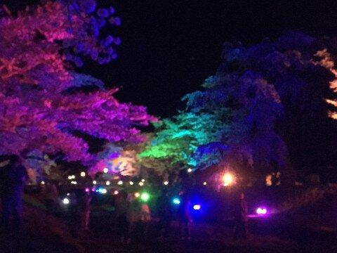 【桜・見頃】観音寺川の桜名所・お花見写真