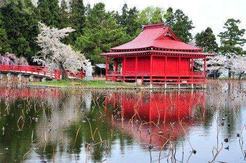 【桜・見頃】猿賀公園の桜名所・お花見写真