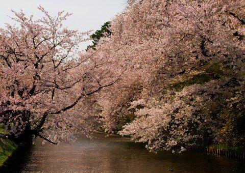 弘前公園の桜名所・お花見写真