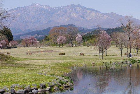 日光大谷川公園の桜名所・お花見写真