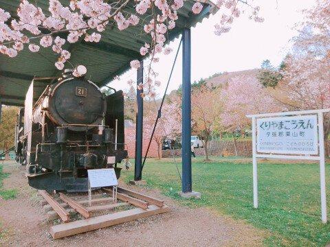 【桜・見頃】栗山公園