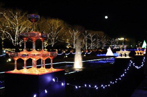 国営昭和記念公園のイルミネーション写真