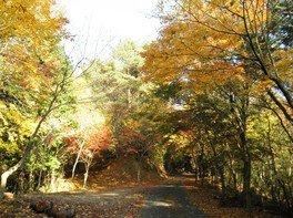 庚申山 広徳寺の紅葉
