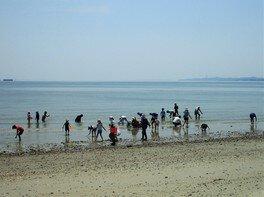 4月中旬から楽しめるアサリの潮干狩り