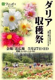 ダリア収穫祭