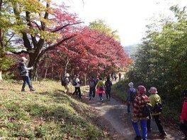 紅葉山公園の紅葉