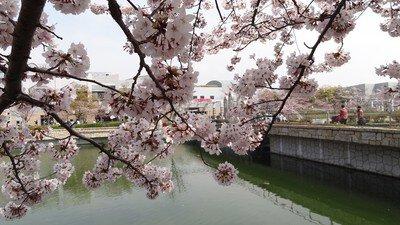 エブノ泉の森ホール周辺の桜