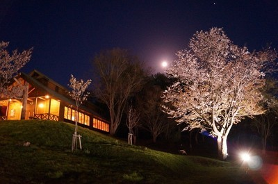 【臨時休園】芦別市旭ヶ丘公園の桜