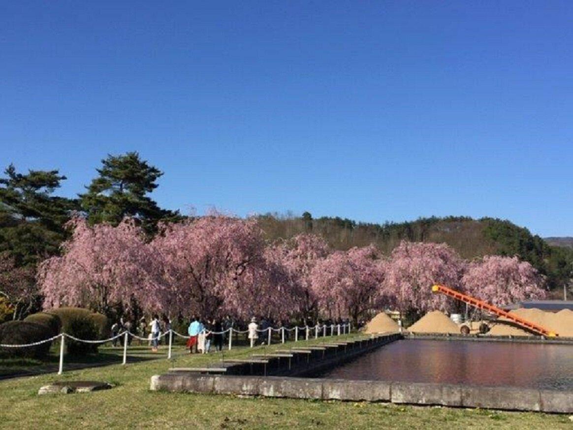 「米内浄水場 桜」の画像検索結果
