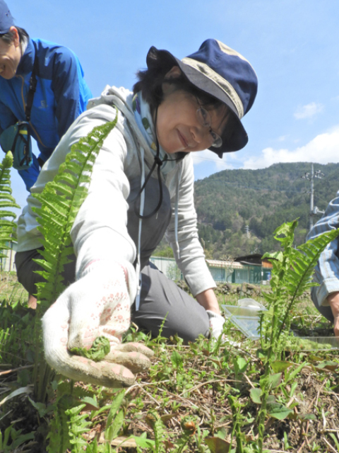 早川エコファーム共催  おばあの畑で山菜・野草採り