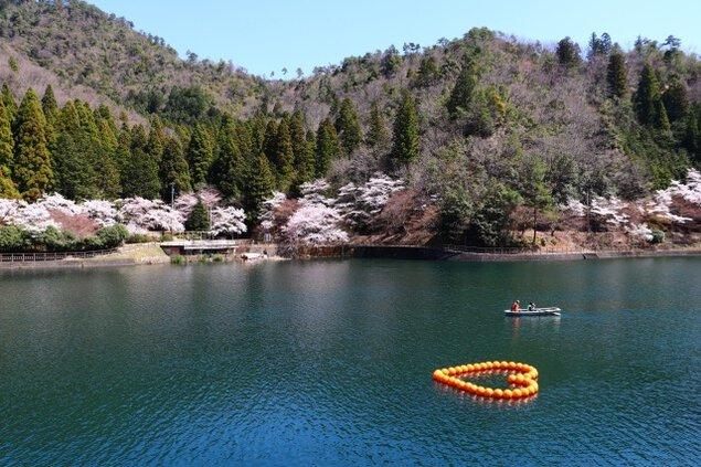 【桜・見ごろ】伊自良湖