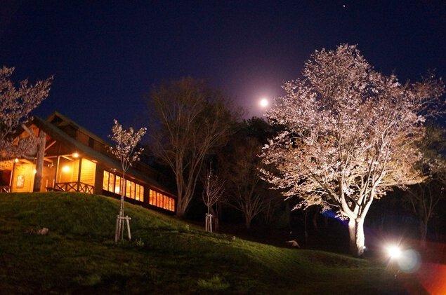 芦別市旭ケ丘公園の桜