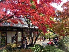 神戸市立須磨離宮公園の紅葉