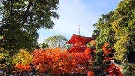 須磨寺の紅葉