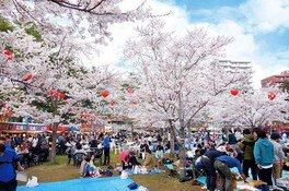 西公園の桜(宮城県)