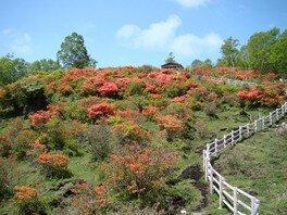 【花・見ごろ】赤城山山頂付近 レンゲツツジ&新緑