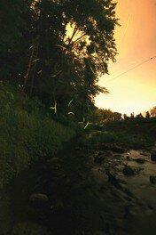 韮山反射炉 ホタル観賞の夕べ