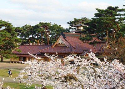 【臨時休園】五稜郭公園の桜