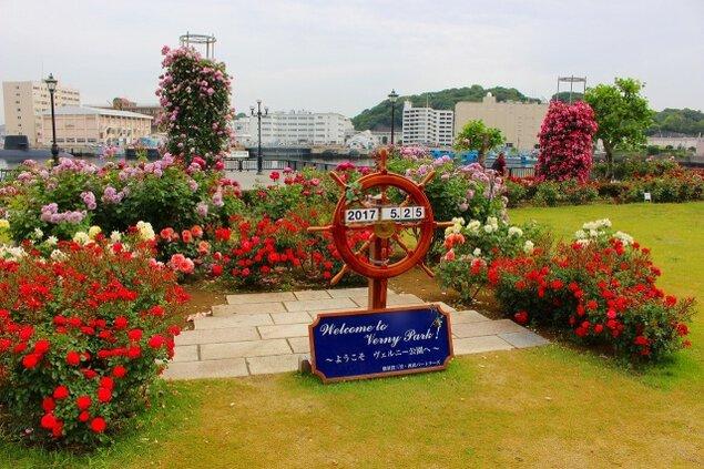 【花・見ごろ】ヴェルニー公園のバラ