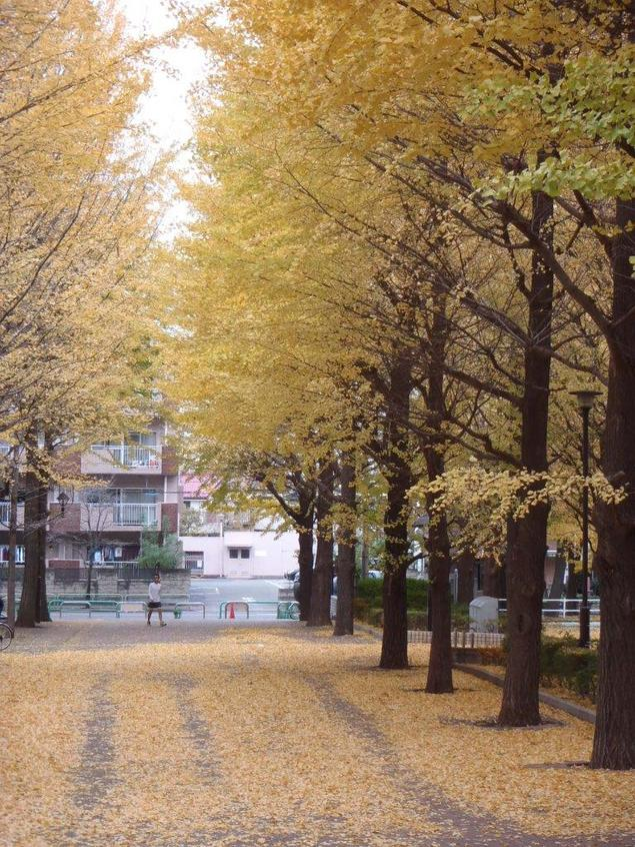 都立城北中央公園の紅葉