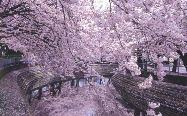 第53回一宮桜まつり