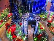 チューリップ四季彩館常設展「百花繚乱」~クリスマス~
