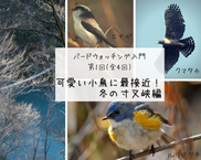 バードウォッチング入門 第1回「可愛い小鳥に最接近」冬の寸又峡編