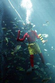 鬼ダイバーによる魚の餌付けショー