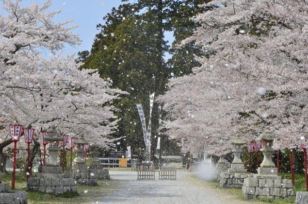馬陵公園 桜まつり