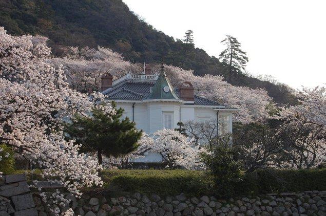 【桜・見ごろ】鳥取城跡・久松公園