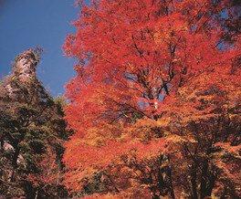 深倉峡の紅葉