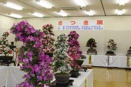 茨城県植物園 さつき展